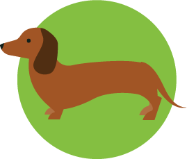 learn about dachshunds